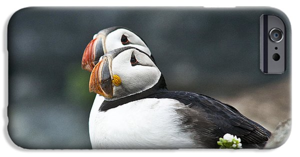 Sea Birds iPhone Cases - Puffins iPhone Case by Heiko Koehrer-Wagner