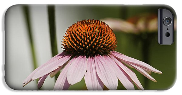 Cone Flower iPhone Cases - Purple Cone Flower - Echinacea iPhone Case by Keith Webber Jr