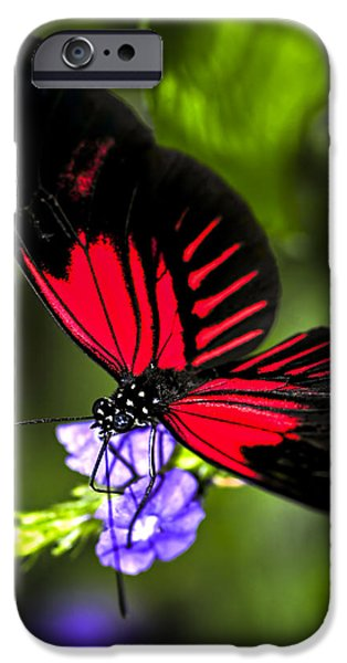 Red heliconius dora butterfly iPhone Case by Elena Elisseeva
