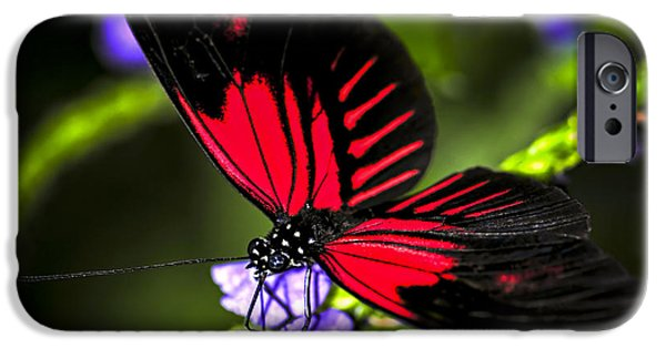 Floral Photographs iPhone Cases - Red heliconius dora butterfly iPhone Case by Elena Elisseeva