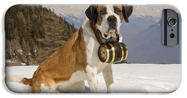 Dog In Landscape iPhone Cases - Saint Bernard iPhone Case by Jean-Michel Labat