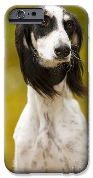 Dog Close-up iPhone Cases - Saluki iPhone Case by Jean-Michel Labat
