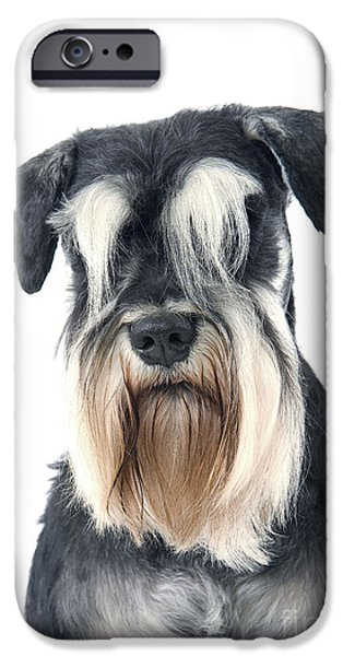 Dog Close-up iPhone Cases - Schnauzer iPhone Case by Jean-Michel Labat
