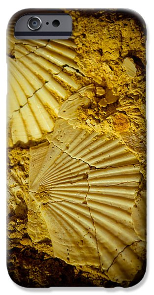 Ornament Pyrography iPhone Cases - Seashell in stone iPhone Case by Raimond Klavins