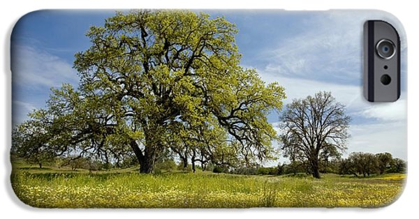 Oak Creek iPhone Cases - Shell Creek, California iPhone Case by Bob Gibbons