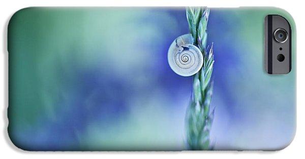Invertebrates iPhone Cases - Snail on Grass iPhone Case by Nailia Schwarz