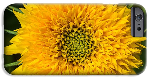 Sunflowers Photographs iPhone Cases - Sunflower iPhone Case by Edward Fielding