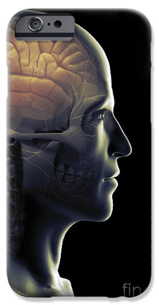 Frontal Bones iPhone Cases - The Human Brain iPhone Case by Science Picture Co