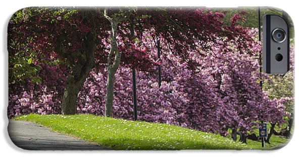 Chatham iPhone Cases - Victoria Park Chatham iPhone Case by Dawn OConnor