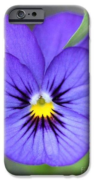 Viola named Sorbet Blue Heaven Jump-Up iPhone Case by J McCombie