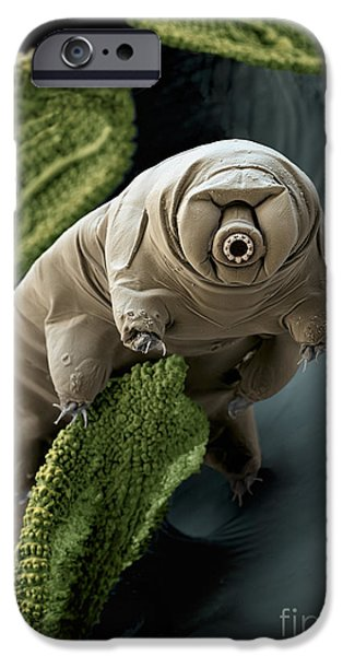 Water Bear iPhone Case by Eye of Science and Science Source