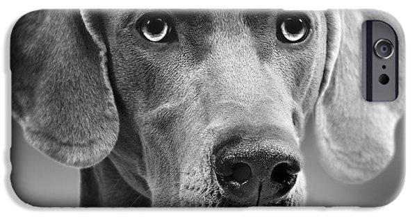 Dog Close-up iPhone Cases - Weimaraner Dog iPhone Case by Jean-Michel Labat