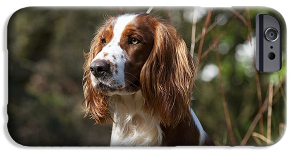 Dog Close-up iPhone Cases - Welsh Springer Spaniel iPhone Case by John Daniels