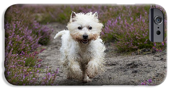 Rainy Day iPhone Cases - West Highland White Terrier iPhone Case by John Daniels