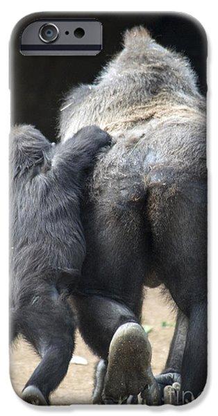 Gorilla iPhone Cases - Western Lowland Gorilla iPhone Case by Mark Newman