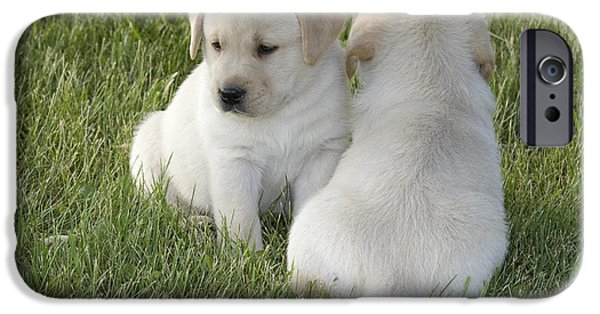 Cute Puppy iPhone Cases - Yellow Labrador Puppy iPhone Case by Linda Freshwaters Arndt