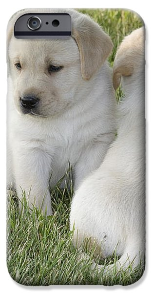 Yellow Labrador Puppy iPhone Case by Linda Freshwaters Arndt