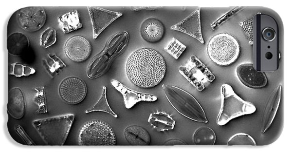 Diatom Photographs iPhone Cases - 50 Diatom Species Arranged  iPhone Case by Science Source