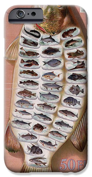 Business Digital Art iPhone Cases - 50 Fish from American Waters iPhone Case by Nomad Art And  Design