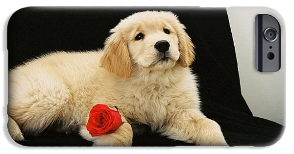 Puppy Love Greeting Cards iPhone Cases - #502 33 Maggie Puppy Love FILM.jpg iPhone Case by Robin Lee Mccarthy Photography
