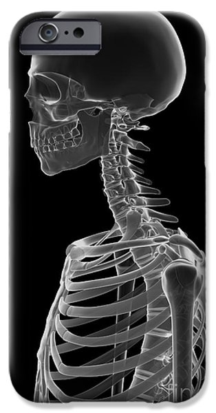 Frontal Bones iPhone Cases - Bones Of The Upper Body iPhone Case by Science Picture Co