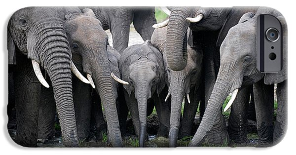 Wild Animals iPhone Cases - African Elephants Loxodonta Africana iPhone Case by Panoramic Images