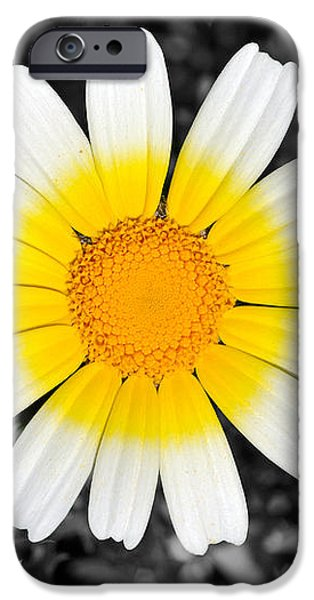 Daisy iPhone Case by George Atsametakis