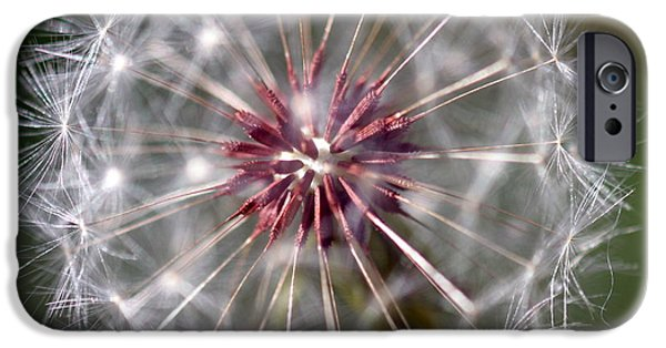 Nature Abstract iPhone Cases - Dandelion Seed Head iPhone Case by Henrik Lehnerer