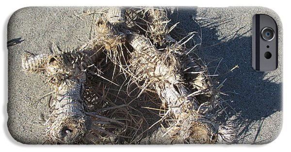 Winter Storm iPhone Cases - Driftwood on the beach iPhone Case by Chani Demuijlder