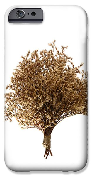 Aromatic iPhone Cases - Dry Flowers Bunch iPhone Case by Olivier Le Queinec