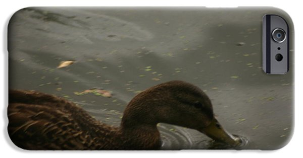 Dogs iPhone Cases - Duck iPhone Case by Eric Brock