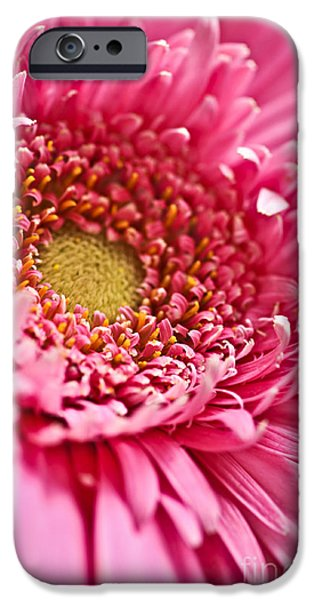 Flora iPhone Cases - Gerbera flower iPhone Case by Elena Elisseeva