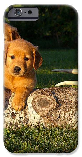 Golden Retriever Puppies iPhone Case by Linda Freshwaters Arndt