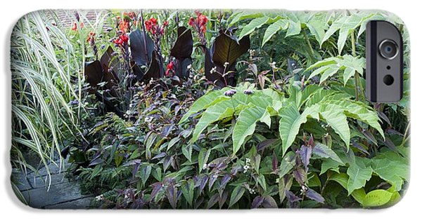 Canna iPhone Cases - Great Dixter, East Sussex, Uk iPhone Case by Carol Casselden