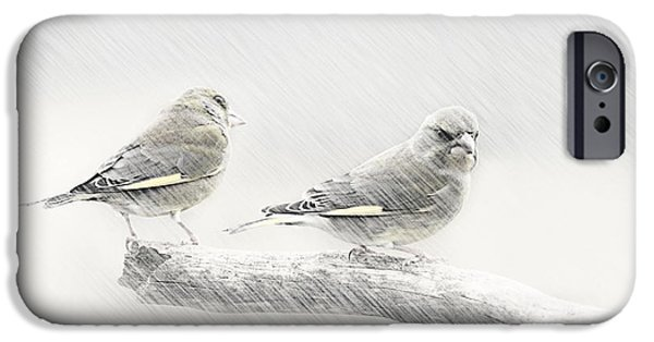 Animal Photography Mixed Media iPhone Cases - Greenfinch  iPhone Case by Heike Hultsch