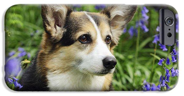 Dog Close-up iPhone Cases - Pembroke Welsh Corgi iPhone Case by John Daniels