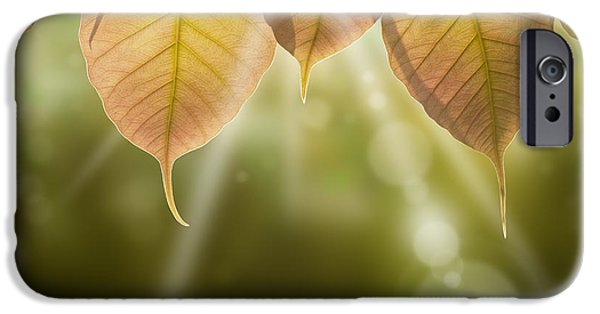 Autumn Trees iPhone Cases - Pho Or Bodhi iPhone Case by Atiketta Sangasaeng