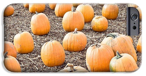 Abundance iPhone Cases - Pumpkins iPhone Case by Tom Gowanlock