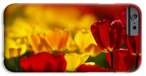 Tulips Photographs iPhone Cases - Red and Yellow Tulips iPhone Case by Nailia Schwarz