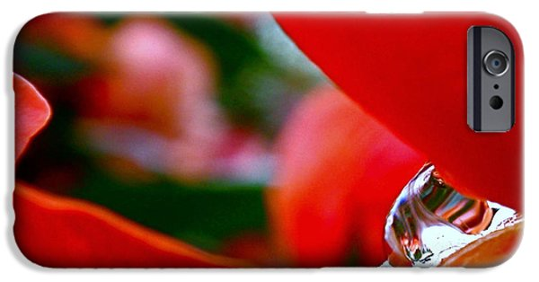 Rain iPhone Cases - Roses after the Rain iPhone Case by Rona Black