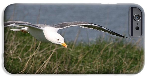 Seagull Pyrography iPhone Cases - Inchcolm Island iPhone Case by Arif Cakmak