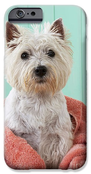Pet Care iPhone Cases - West Highland White Terrier iPhone Case by John Daniels