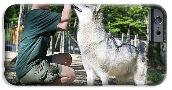 Nature Study iPhone Cases - Wolf Research iPhone Case by Louise Murray