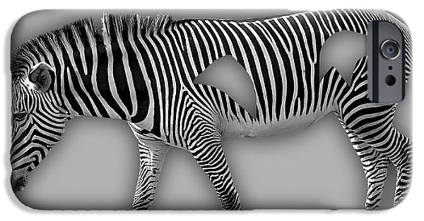 Zebra iPhone Cases - Zebra Collection iPhone Case by Marvin Blaine