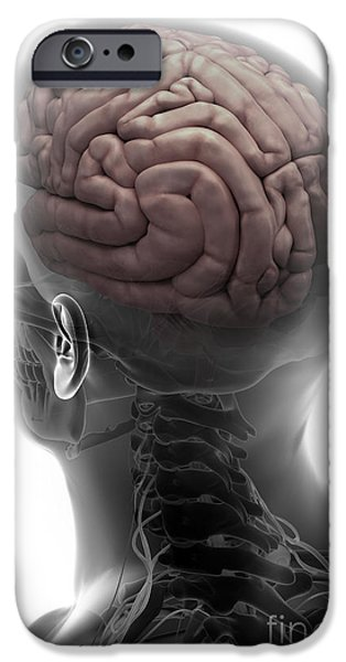 Frontal Bones iPhone Cases - Human Brain iPhone Case by Science Picture Co