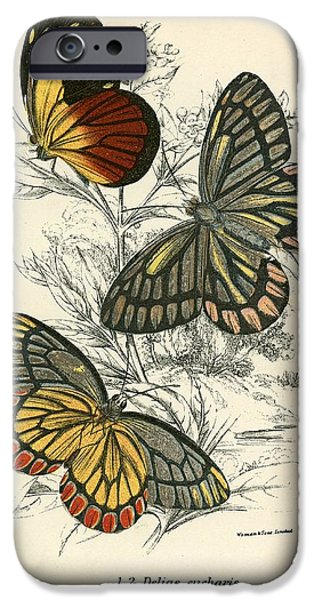 Natural History iPhone Cases - Butterflies iPhone Case by English School