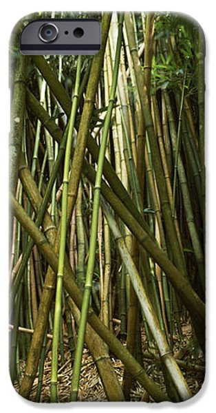 Forest iPhone Cases - Bamboo Forest, Oheo Gulch, Seven Sacred iPhone Case by Panoramic Images