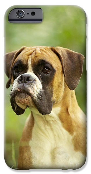 Boxer iPhone Cases - Boxer Dog iPhone Case by Jean-Michel Labat