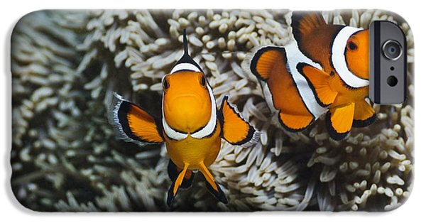 Clown Fish Photographs iPhone Cases - Clown Anemonefish iPhone Case by Georgette Douwma
