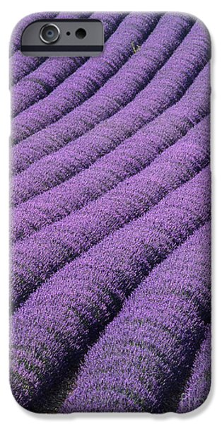 Agricultural iPhone Cases - Field Of Lavender iPhone Case by David Nunuk